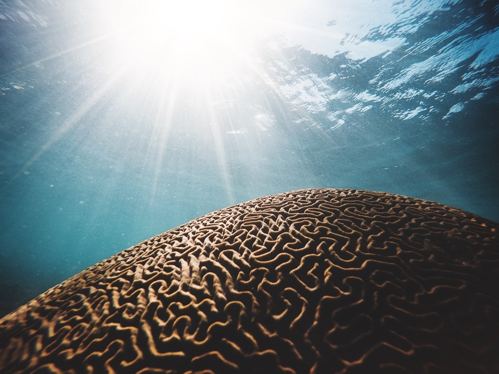 Surface of brown coral, similar to the cerebral cortex, at the top of the sky with the sun.